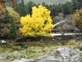 紅葉の御岳渓谷で立ち寄りたいスポット3選